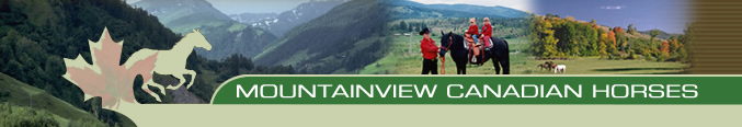 Mountainview Canadian Horses Breeders